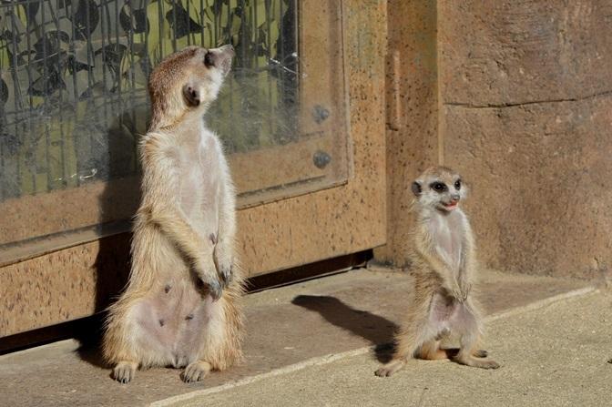 右:生後2ヶ月ぐらいの赤ちゃん(よこはま動物園ズーラシアにて2015年11月に撮影)