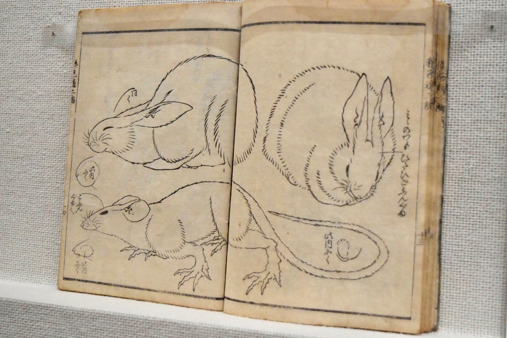 葛飾北斎 『画本彩色通』二編 弘化5年(1848)すみだ北斎美術館所蔵