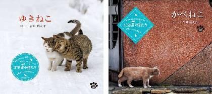 北海道の厳しい環境でしなやかに生きる猫をとらえた写真集『ゆきねこ』『かべねこ』発売記念写真展が開催