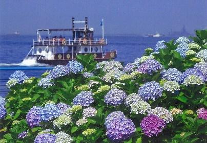 2万株のあじさいが咲き誇る『第19回 八景島あじさい祭』まもなく開催
