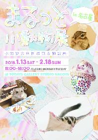 ハリネズミ、ハムスター、リス……キュートな小動物で新年初癒し!『まるっと小動物展』名古屋で1月に開催