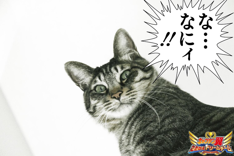 使用例 (C)高橋陽一/集英社 (C)高橋陽一/集英社・テレビ東京・エノキフィルム(C)KLabGames
