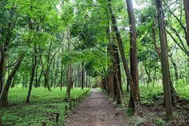 千葉県。県民の森。