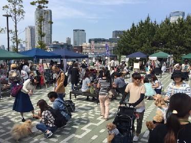 """愛犬家さん集合!豊洲で開催の""""犬フェス""""とは?"""