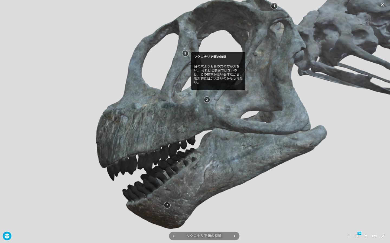 カマラサウルス亜成体の特徴 (ホームページより引用:群馬県立自然史博物館 )