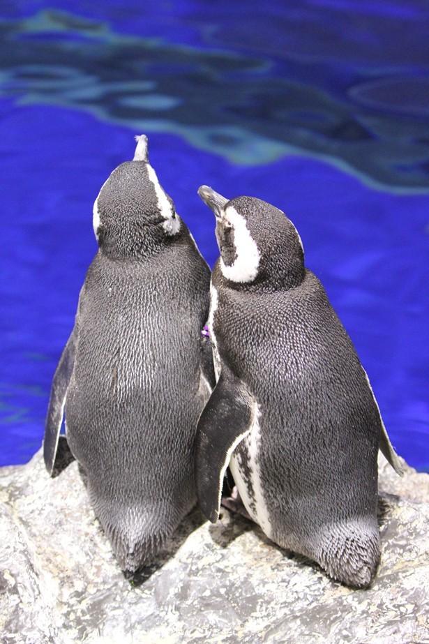 恋するペンギンが主役!すみだ水...
