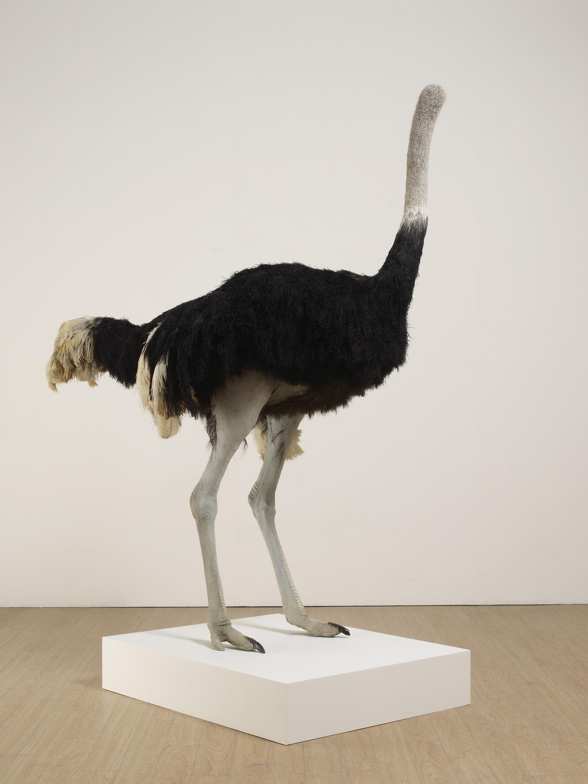 デイヴィッド・シュリグリー「ダチョウ」2009 Courtesy: Artist and the British Council Collection 撮影: Stephen White