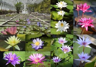 熱川バナナワニ園で『早春花めぐり』イベント開催