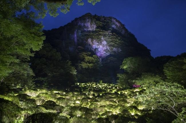 生命は連続する光 - ツツジ谷 / Life is Continuous Light - Azalea Valley teamLab, 2017, Interactive Digitized Nature, Sound: Hideaki Takahashi
