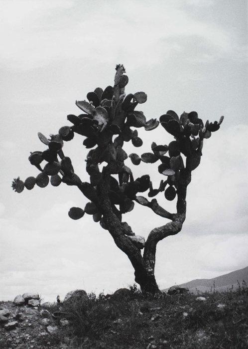 岡本太郎『ジャグル/メキシコ』1967年