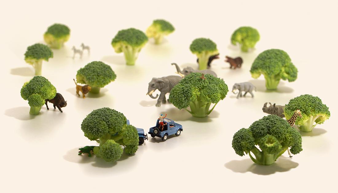 ≪ブロッコリー1本分のサバンナ≫ (c)Tatsuya Tanaka