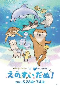 「可愛い嘘のカワウソ」× 新江ノ島水族館『えのすいだぬ!』開催決定