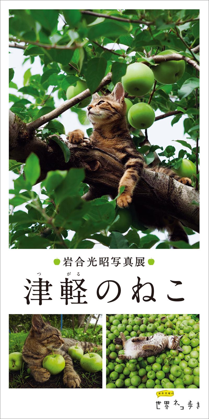 岩合光昭写真展 「津軽のねこ」