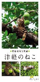 リンゴにまみれるねこを愛でる 岩合光昭写真展 「津軽のねこ」が銀座で開催