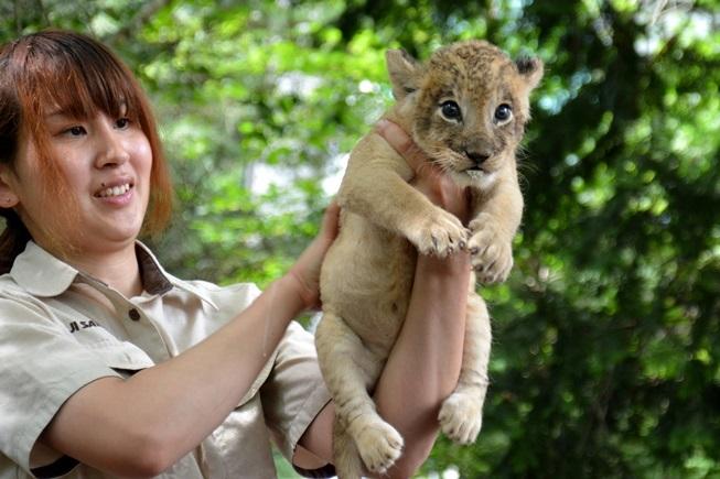 赤ちゃんライオンの「ミルクタイム」(ミルクを飲んだ後は背中をトントン)