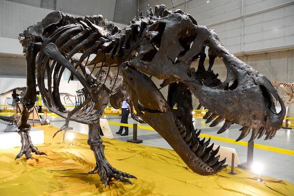今にもこちらに向かってきそうな「ティラノサウルス」の全身復元骨格