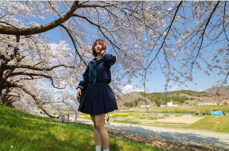 一目千本桜(大河原)「tohoku365.com」より