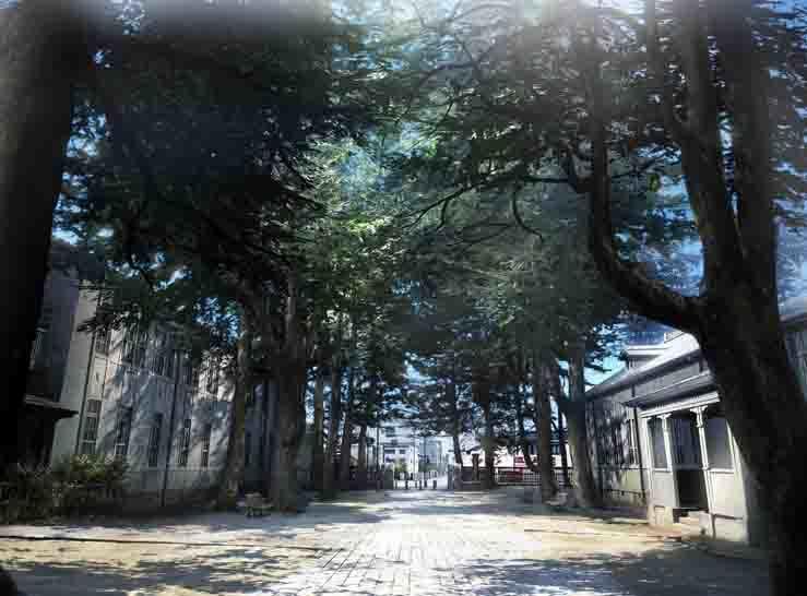 イメージボード 県の森