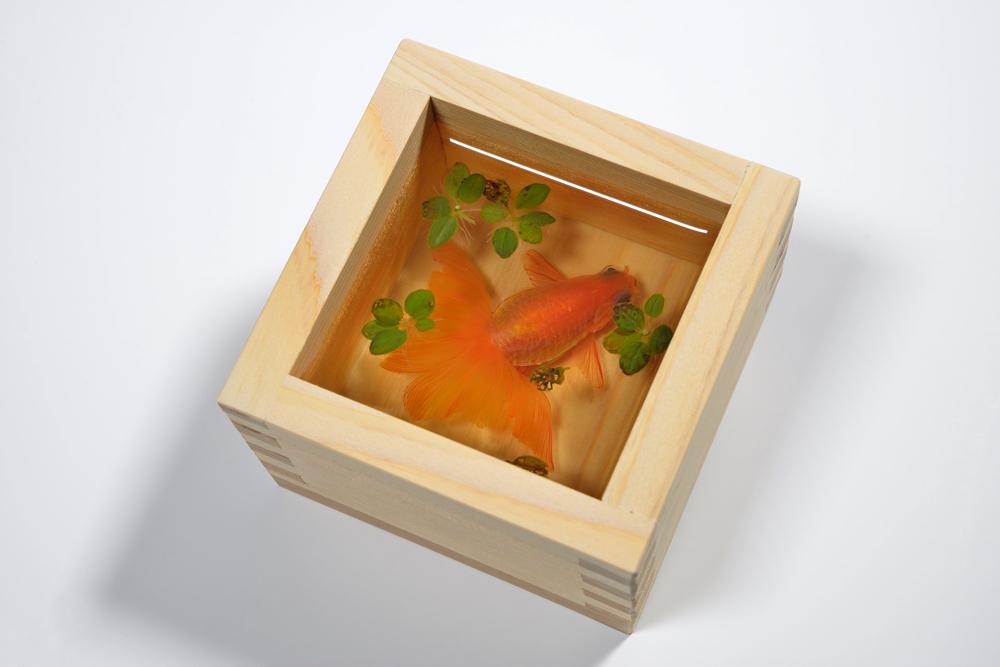 金魚絵師・深堀隆介の新作 金魚酒「夕奈」