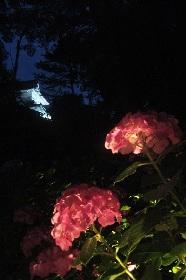 【小田原城・万葉の湯探訪記】 歴史がある、だから梅雨のストレスも解消できる