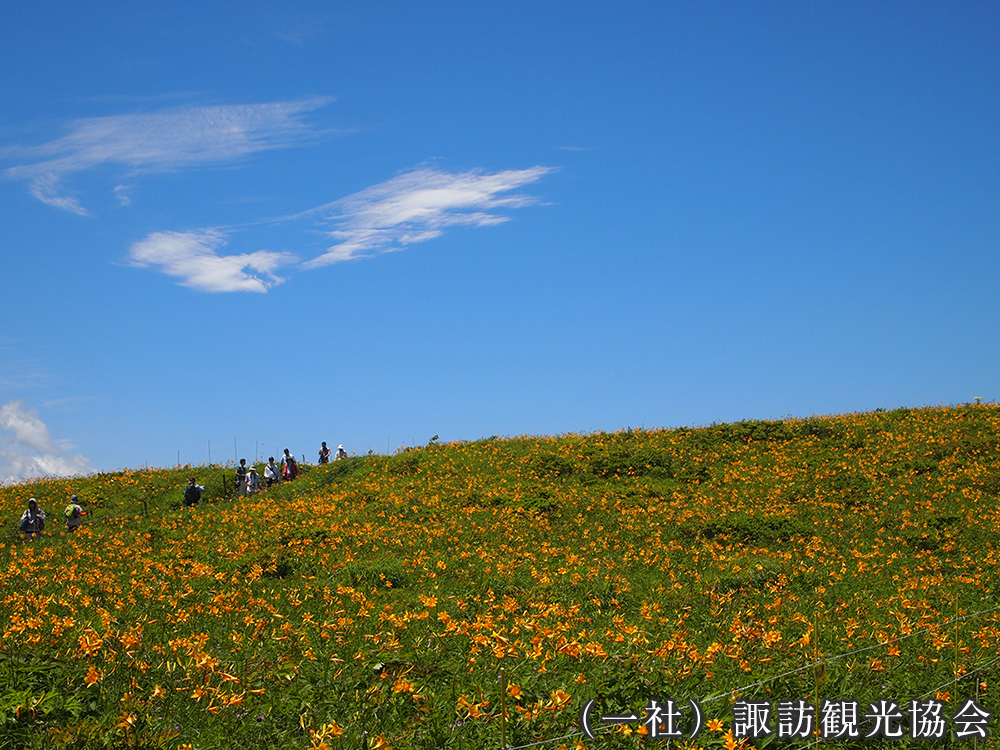 霧ヶ峰 (一社)諏訪観光協会