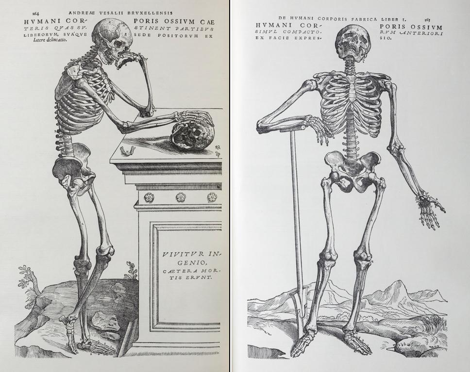 アンドレアス・ヴェサリウス『ファブリカ』 ファクシミリ版 1964 年より ※本展には 1543 年発行の初版本 (広島経済大学所蔵)が展示されます。