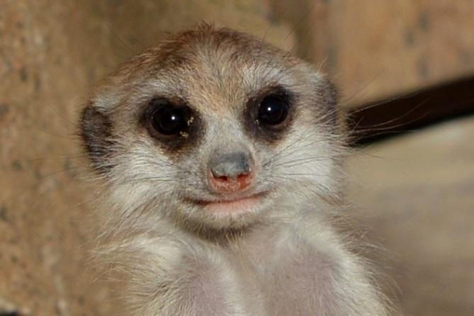 生後2ヶ月ぐらいの赤ちゃん(よこはま動物園ズーラシアにて2015年11月に撮影)