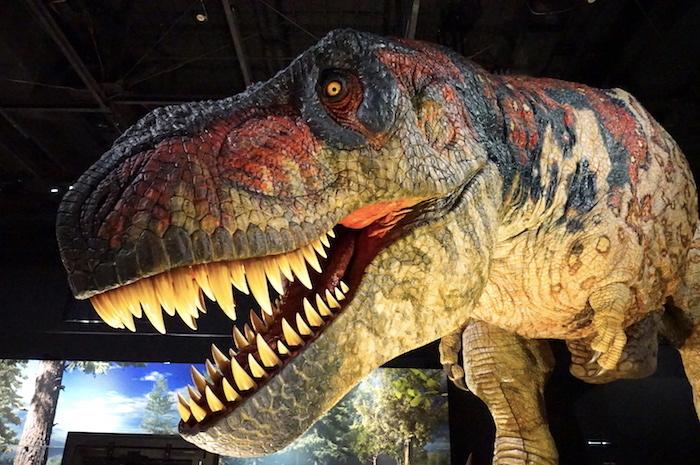 『恐竜展2021』ティラノサウルス ロボット (C)ココロ
