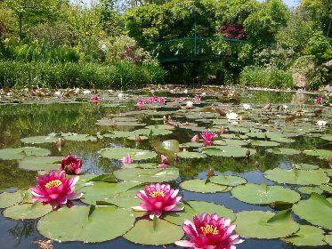フランス印象派をテーマにした庭園「ガーデンミュージアム比叡」 夏のイベントを多数開催
