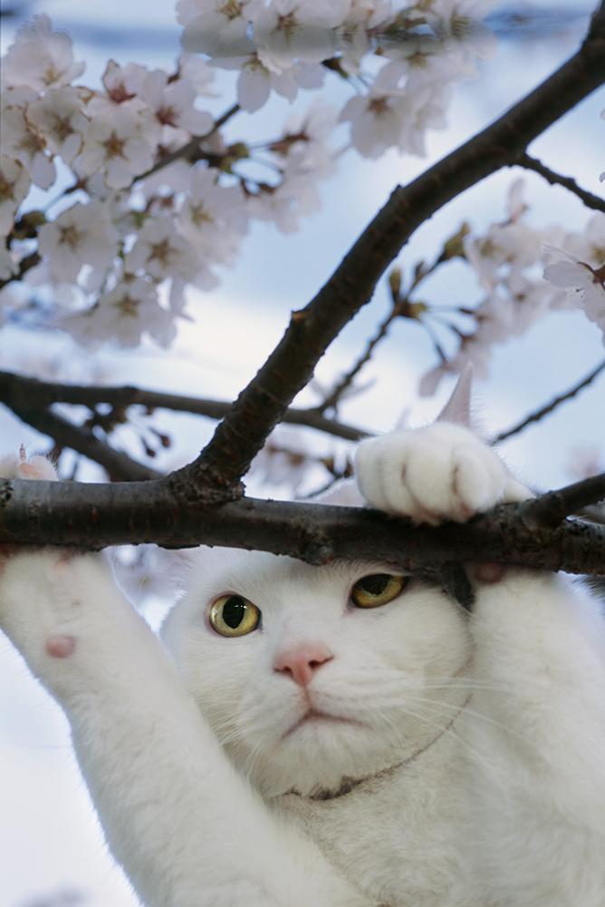 ときどきお泊りに来るにゃんきっちゃんは木登りが苦手です。(c) Mitsuaki Iwago