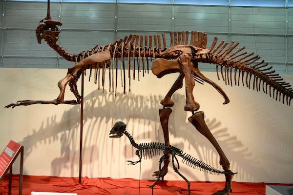 頭に一本角を持つ「チンタオサウルス」とドーム状の頭の「プレノケファレ」