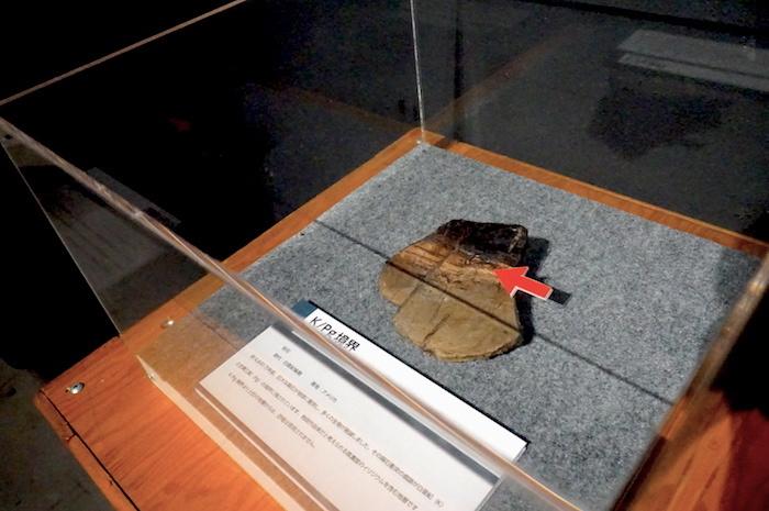 K/Pg境界 福井県立恐竜博物館所蔵