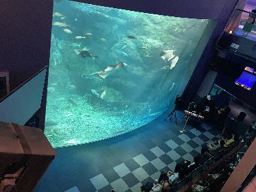 8月後半も新江ノ島水族館で「おひとりさま水族館」実施決定 ジャズの生演奏やクラゲ飼育のバックヤード見学も