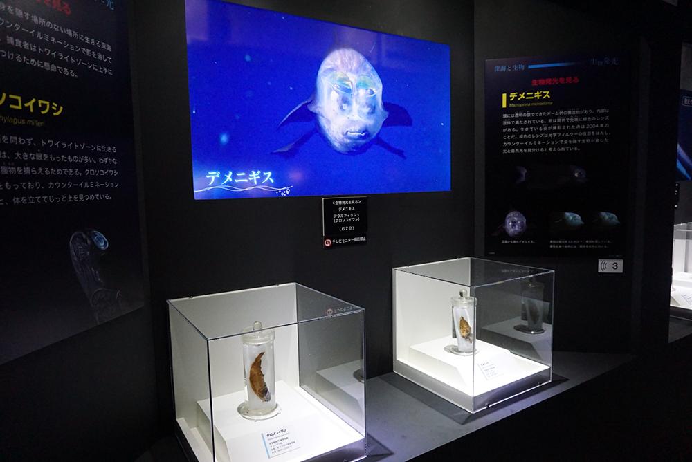 デメニギスの標本と映像