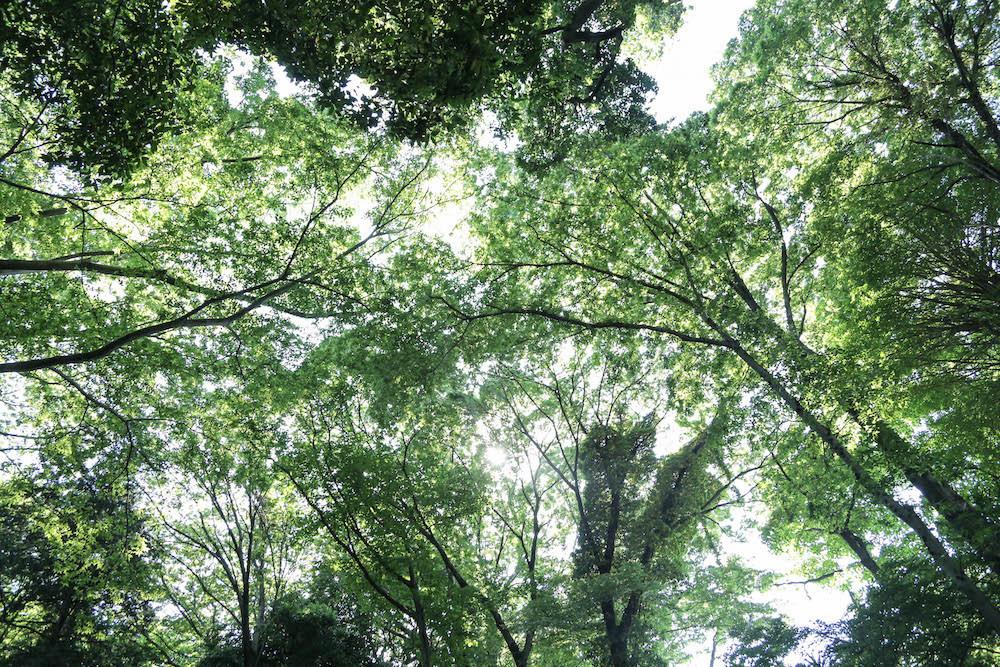 木漏れ日降り注ぐ等々力渓谷へ