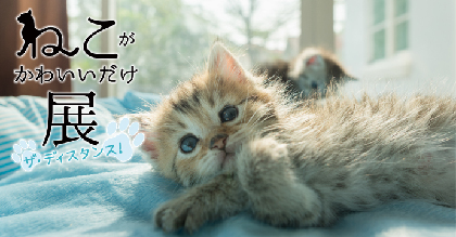 『ねこがかわいいだけ展 ザ・ディスタンス!』開催決定 全国のかわいい猫写真&動画も大募集!