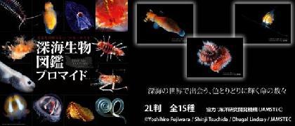 「深海生物図鑑」ブロマイドが、全国ファミリーマート「ファミマプリント」で発売スタート