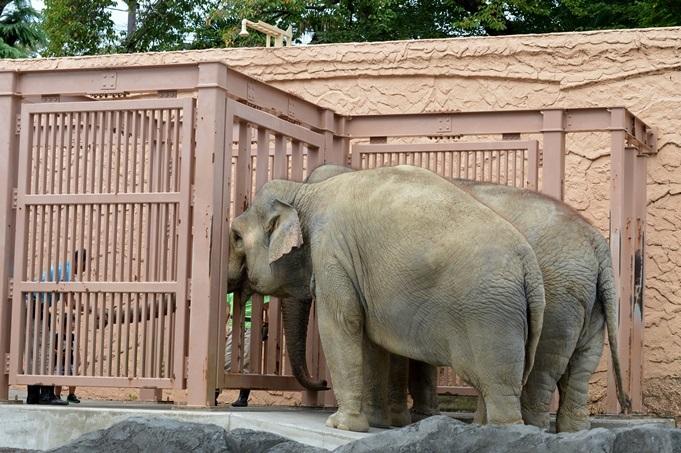 アジアゾウのおやつタイム