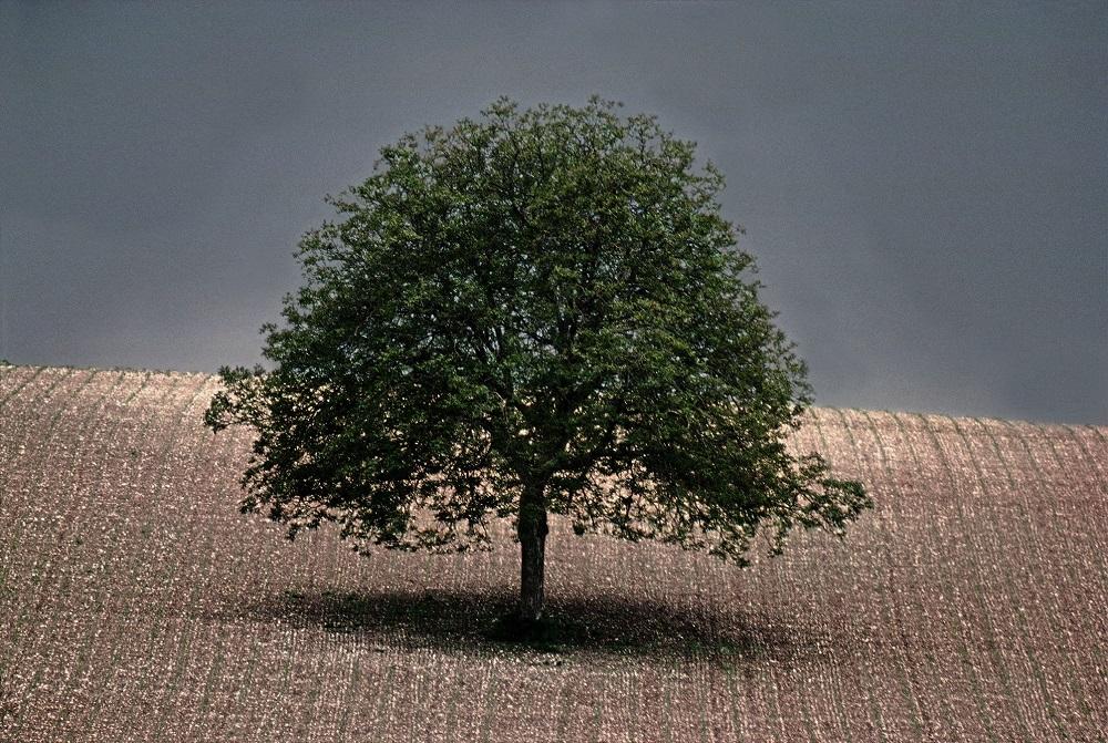 Walnut tree, 1976, Dordogne, France © Frank Horvat