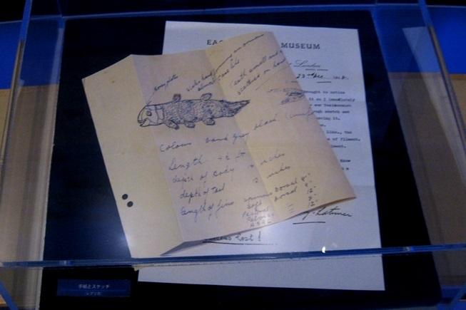シーラカンスが発見されたときに描かれたスケッチのレプリカ