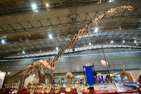 天井に届くくらいの長い首を持つ「ルヤンゴサウルス」