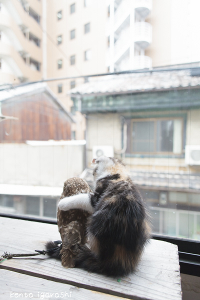 大阪中崎町フクロウコーヒーのフクとマリモ
