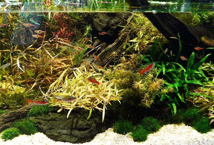 《ネイチャータワー360°》の水槽部分。各エリアごとの植物や魚は、現地に生息しているものを中心に再現しているという。