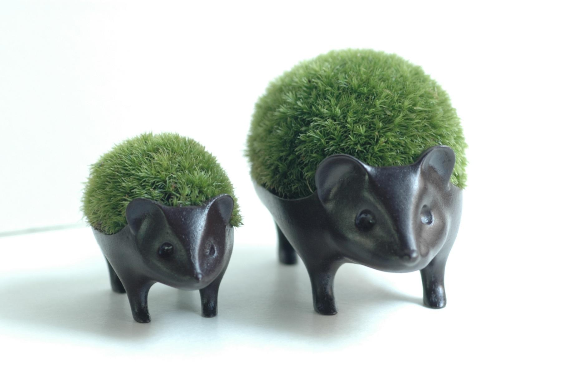 苔盆栽 はりねずみ 子7,020円/親10,800円(税込) 青々と茂った苔を背負った手のひらサイズの可愛い苔盆栽。 富山の鋳物メーカー「能作」とのコラボレーションから生まれました。
