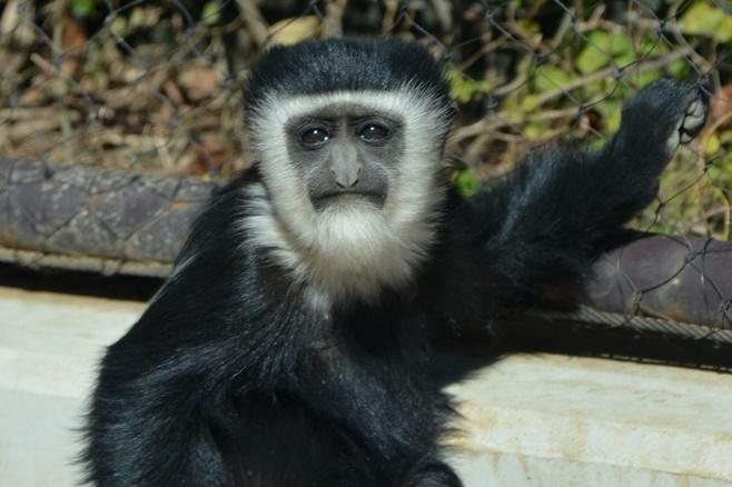 よこはま動物園ズーラシアにて撮影