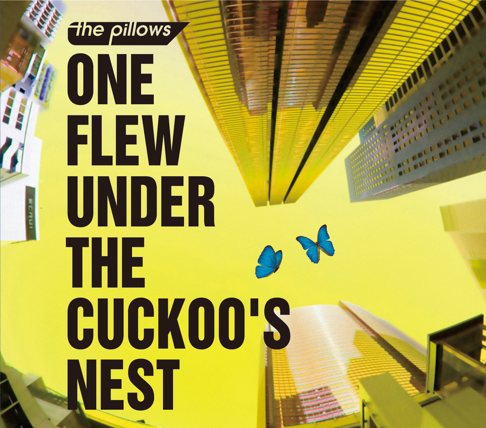 the pillows 055