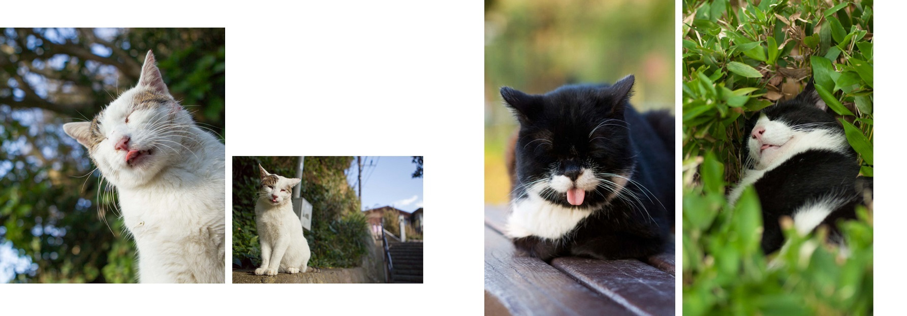 写真集『しまい忘れた猫』