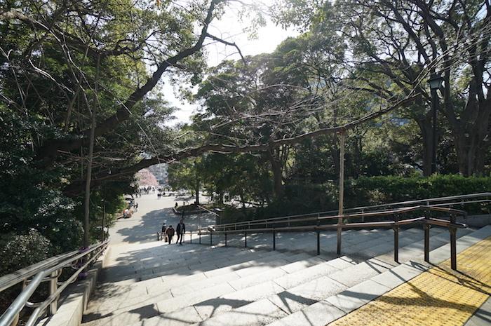 上野公園では早咲きの桜が。会期中、次々と新しい花が咲き開いていくだろう。