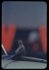 ソール・ライター 《無題》撮影年不詳、発色現像方式印画 (C)Saul Leiter Foundation