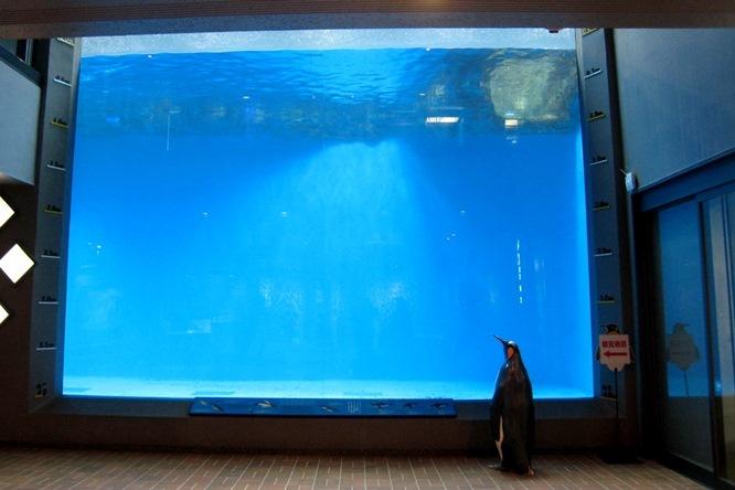 水深4メートルの大水槽